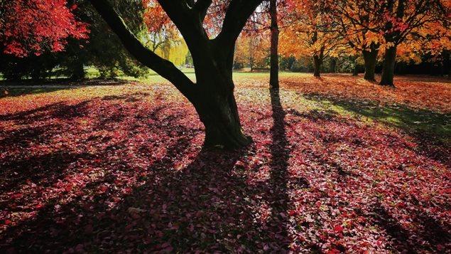 171109_kh01l_rci-trees_sn635.jpg