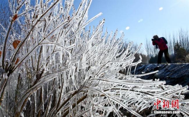 甘肃张掖现冰挂美景 树木似穿上