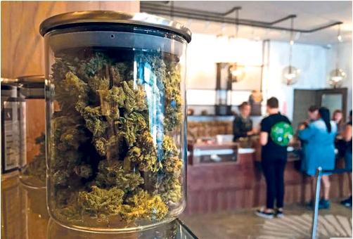 BC吸大麻最低年龄19岁 酒牌局批发 采公私零售制