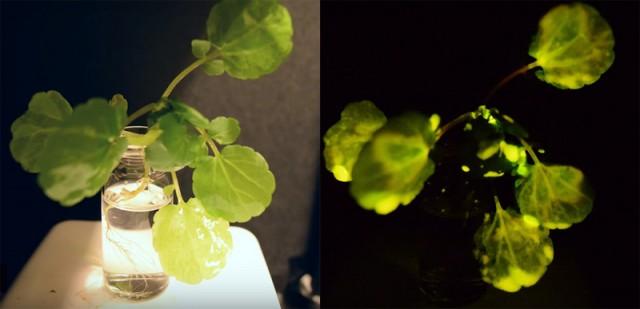 圣诞彩灯好看但费电 于是MIT搞了棵会发光的树