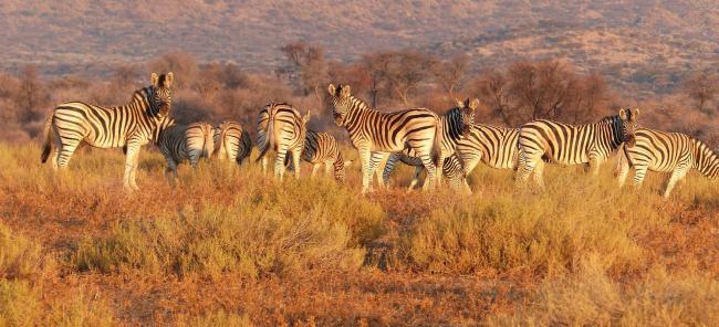 走进坦桑尼亚 走近原始大自然