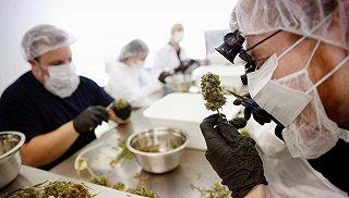 美国要全国禁大麻 隔壁的加拿大邻居却先慌了