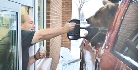 熊仔食雪糕视频上网 职员带出动物园被责