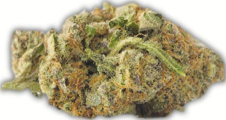 加人买大麻每克不逾7元 联邦与省府瓜分税款