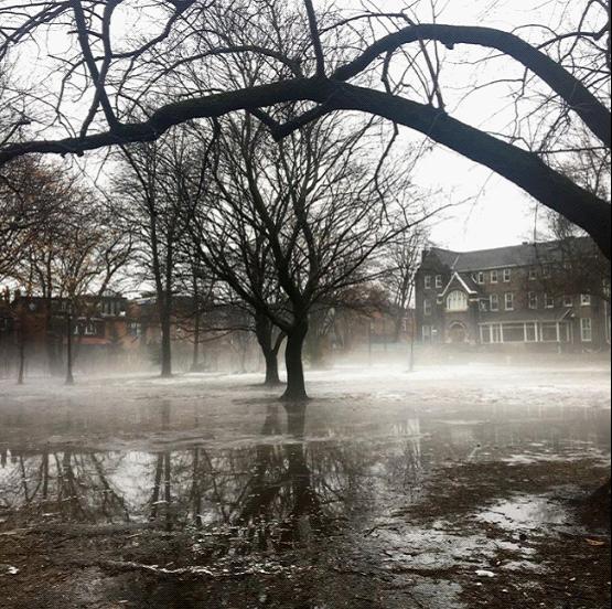 太美!一场雨过后 多伦多变身真实版寂静岭