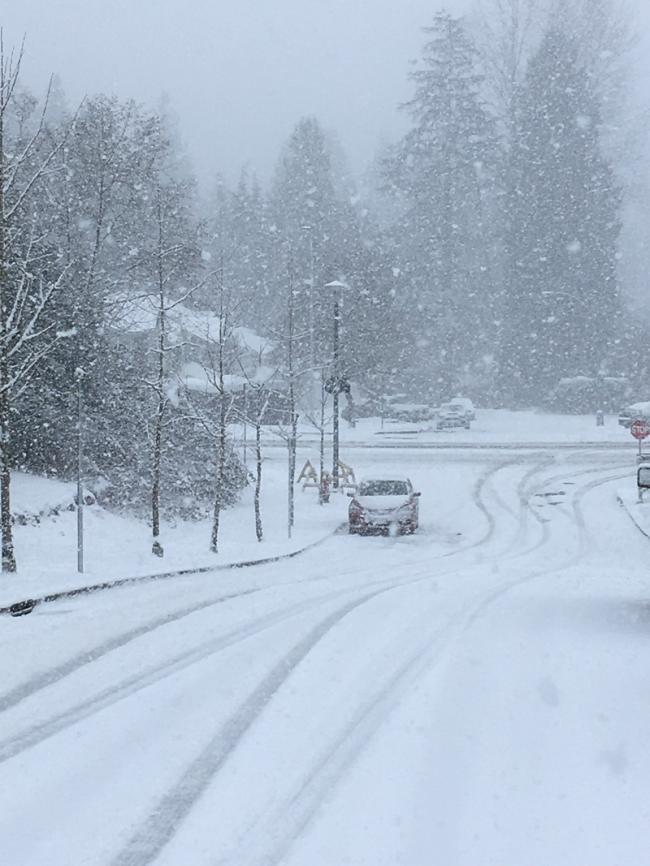 温哥华这个冬天似乎没有尽头
