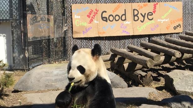 熊猫将离开多伦多!卡尔加里:终于轮到俺们了