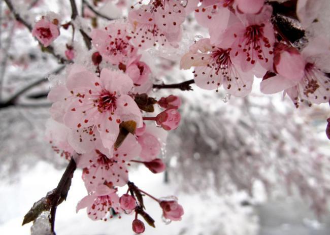 大温本周末将降雪!但有个罕见风景奇观会出现