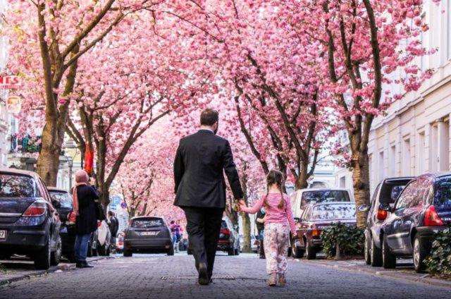 这里的樱花超惊艳 比日本的还要唯美
