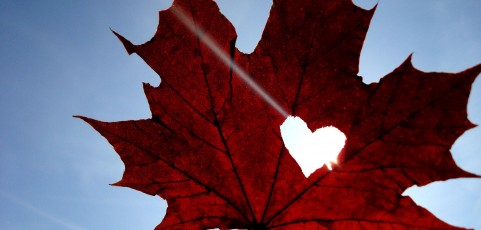 maple_leaf_heart_sky_blue_4524_3072x2304-2538641_481x230.jpg