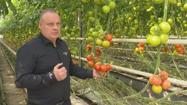stephane-roy-tomates.jpg