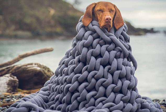 萌翻了!小狗与主人环游世界 旅行摆拍走红网络