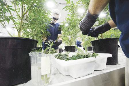 列市欲开大麻店要先向政府申请更改土地用途