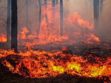 山火逼近酒庄,50户疏散