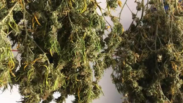 优发国际参院今晚决定大麻法案命运