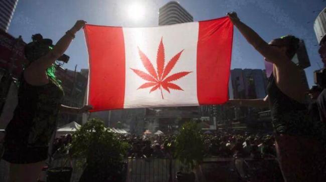 重磅!C-45法案正式通过 大麻将全面合法