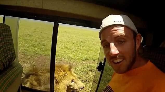 男子开车窗偷摸狮子 下一秒遭狮吼被吓傻