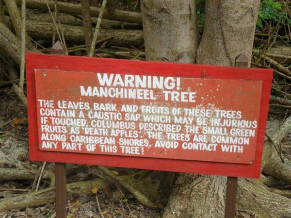 世界上最毒的树外形可爱 但它的剧毒致命