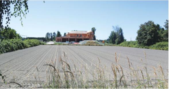 农地工业式大麻种植 省府:地方政府自决