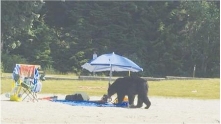 大温白松滩仍有黑熊出没 现在规定禁止携带食物