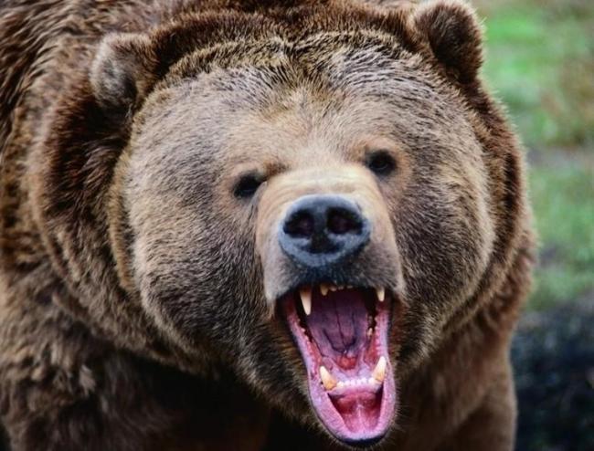 惊悚!BC著名景点 男子划船遭黑熊一路狂奔 视频曝光