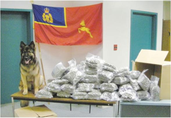 休闲大麻合法化将至 14缉毒警犬被迫退役