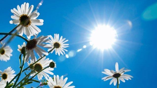 chaleur-soleil-avertissement-635x357.jpg