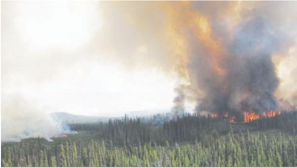雷电酿灾 BC省2日爆逾300山火