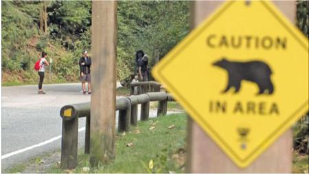 北温高人气登山径 幼熊咬死宠物狗