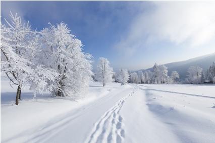 加拿大将迎寒冬暴风雪倒计时 温哥华更多雨夹雪