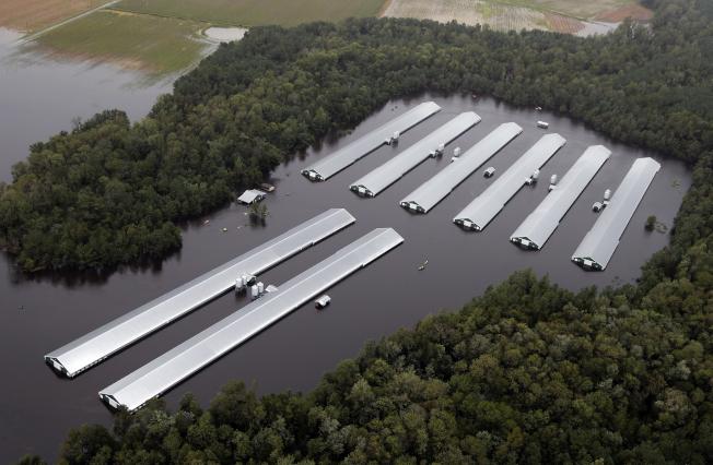 飓风引发洪水 200多万只鸡淹死 还会更糟