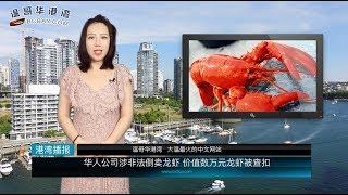 华人公司涉非法倒卖龙虾;加拿大经济危险了