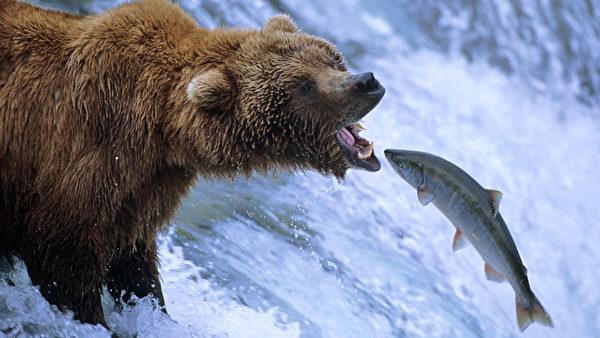 给,温哥华最全的三文鱼垂钓及观赏攻略