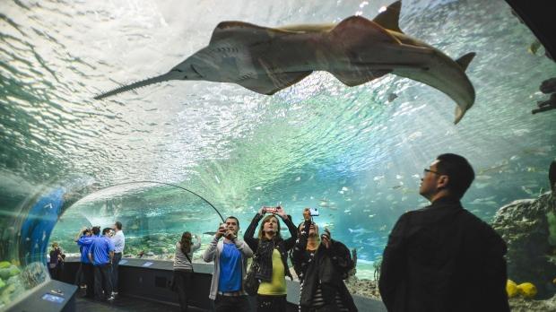 水族馆奇观!男子脱光光与鲨鱼相伴裸泳