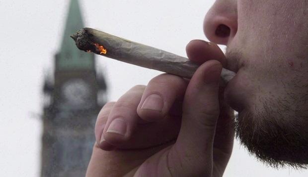 大麻合法化倒计时2天  有些规定你要知道~