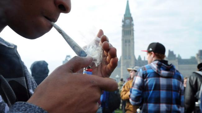histo-cannabis-pot-marijuana.jpg