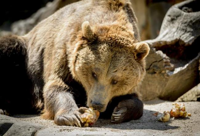 1128grizzly-bear.jpg
