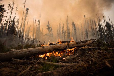 加西山火研究员:山火浓烟伤身 如日吸两包香烟