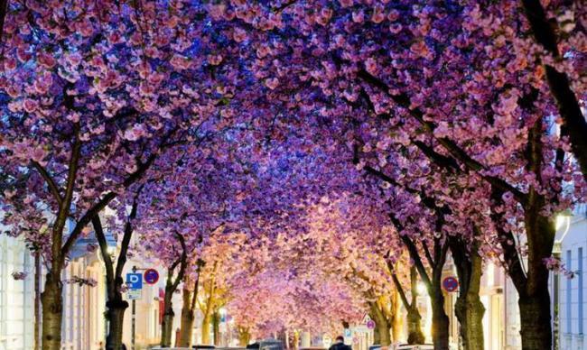再�^半��月,�馗缛A�⒊扇�世界最美的城市
