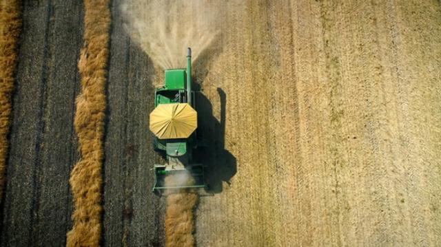 中国停购加拿大芥花油 对其他农产品也严加审查