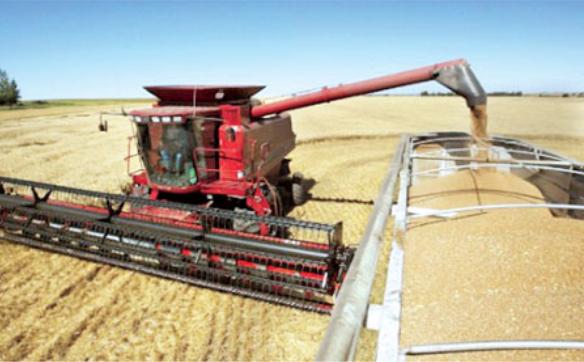 加拿大小麦豌豆亚麻籽等 中国进口商取消购买