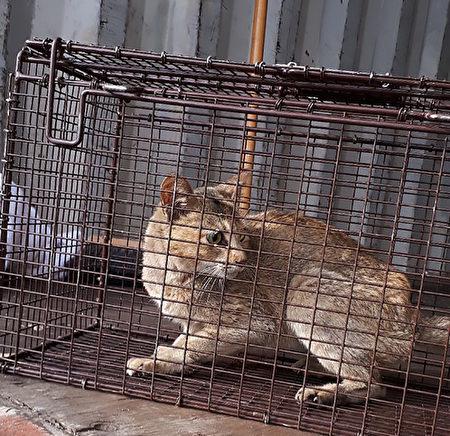 news-cat-from-china-prince-george-825x799-450x436.jpg