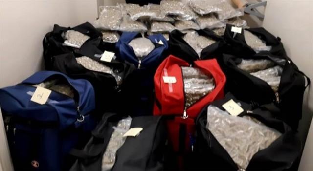 万锦街头截360磅大麻华裔被控 非法市场真火爆