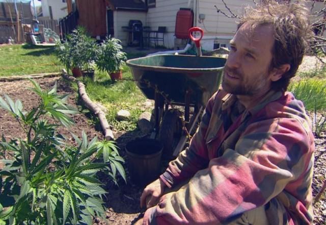 后院可种大麻了,4粒种子58元供不应求