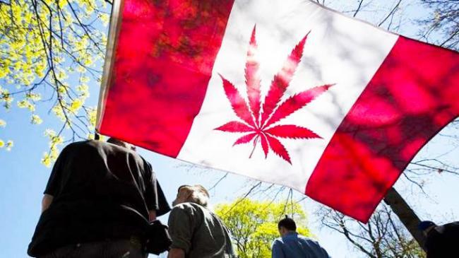 Cannabis-Canada_edited.jpg
