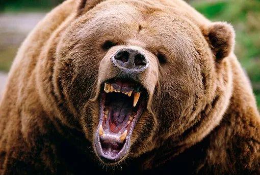 游客在加拿大景�^被巨熊拖走 凌虐致死