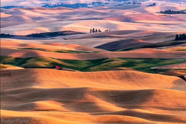 帕卢斯麦田,大地最美的图案