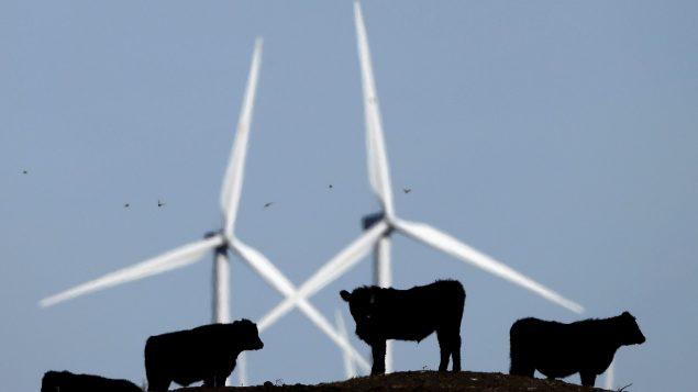 股神巴菲特的能源公司将在阿省兴建风电场
