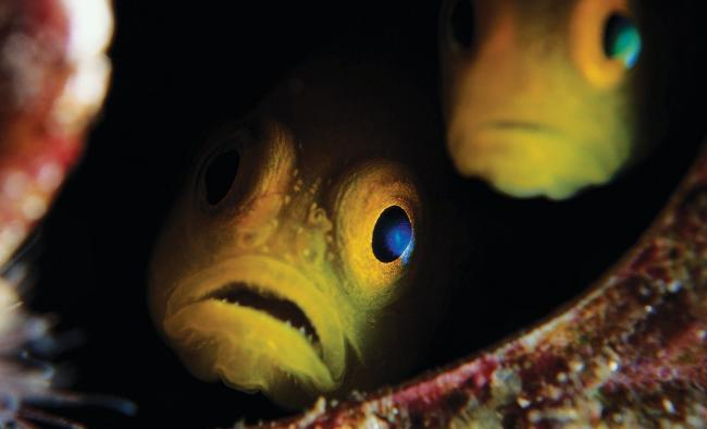 AfterHours_10-2017-ScaryFish_Vancouver-Aquarium.jpg